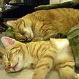 Little Horatio sleeps with Big Horatio