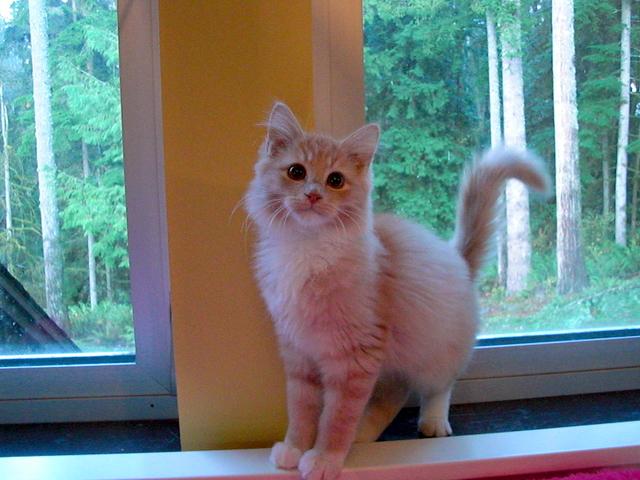 Kittens in kitten rooms Nov 30 252