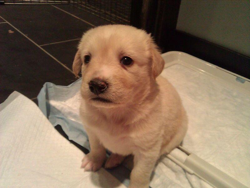 Puppies Week Four3